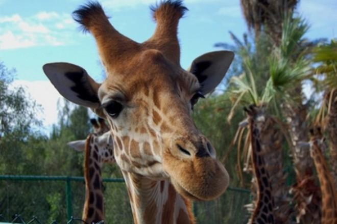 зоопарк Zoo La Lajita на острове Фуэртовентура