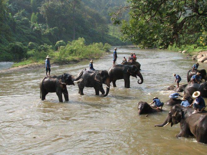 Лагерь слонов BanChangThai1