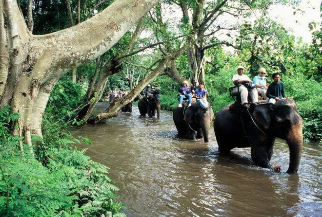 Лагерь слонов BanChangThai3