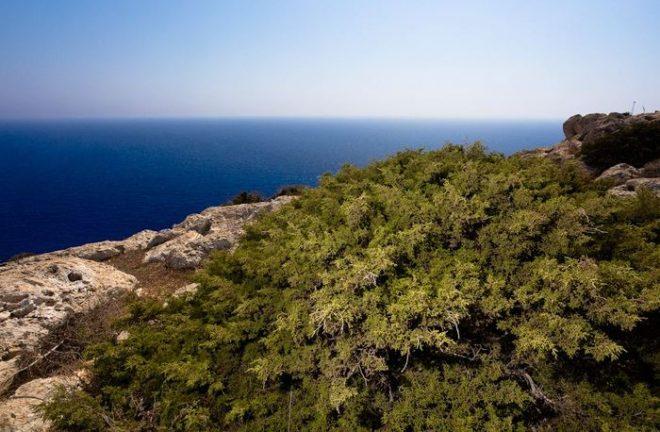 Лесной парк Каво Греко