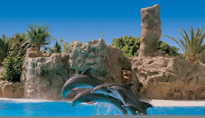 Дельфины в Лоро парке на Тенерифе