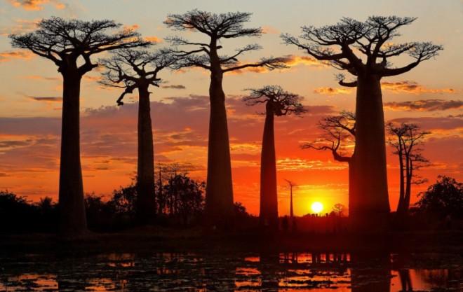 Prazdnik-Baobaba-vo-dvore-muzeya-im.-Naprstka-e1430299550286-890x562