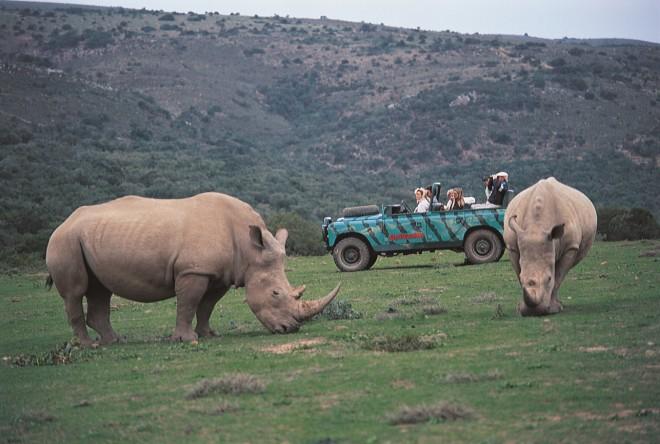 Sydafrika-Amakhala-Næsehorn