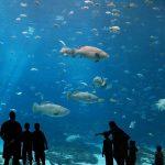 Аквариум с рыбками на Протарасе