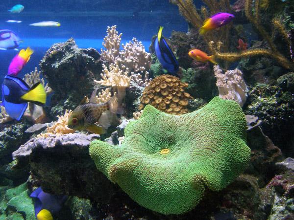 кюрасао аквариум